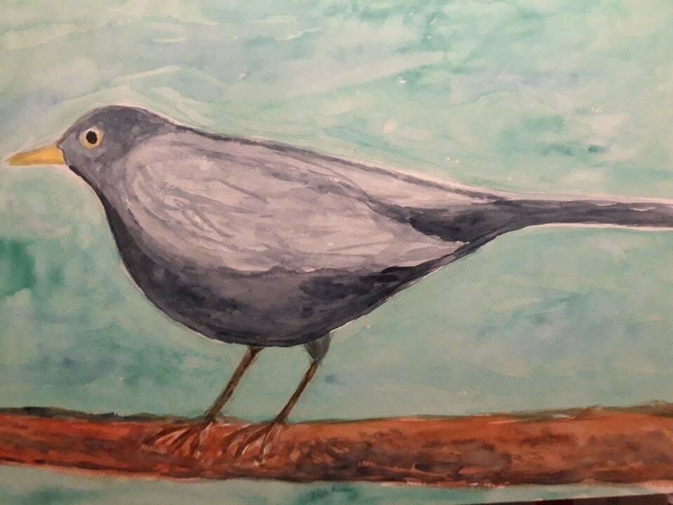 Solsort, akvarel, 2021