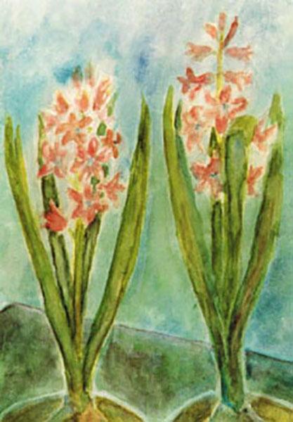 Amnesty International  postkort, lyserøde hyacinter, akvarel