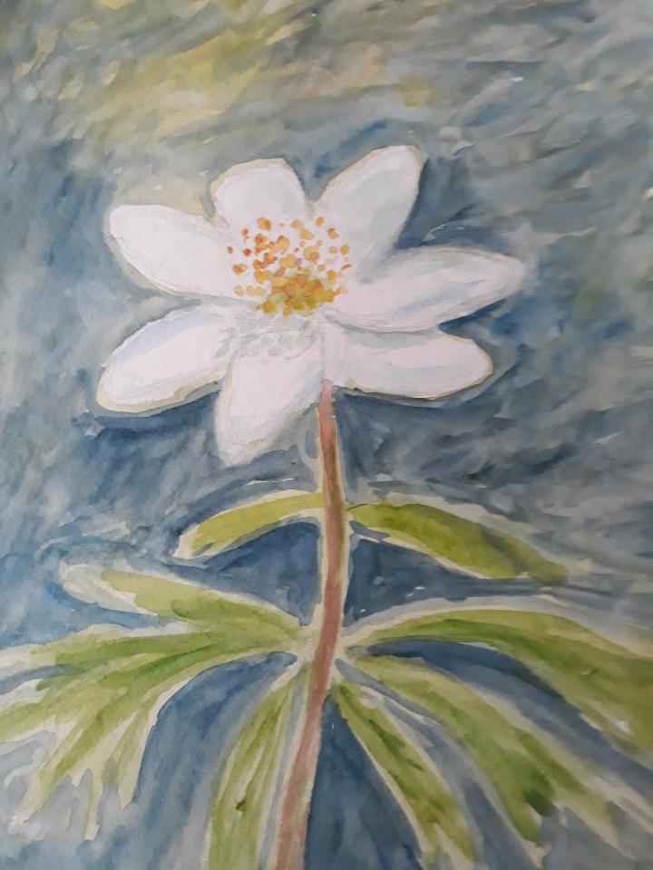 Anemone, akvarel, 2021