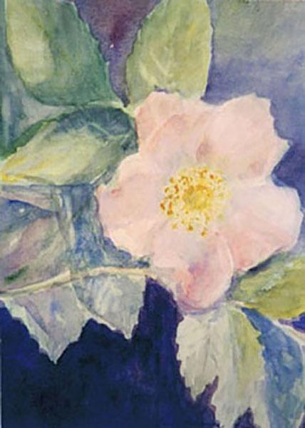Vild rose, akvarel