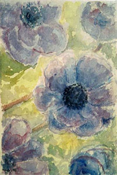 Fransk anemone, akvarel