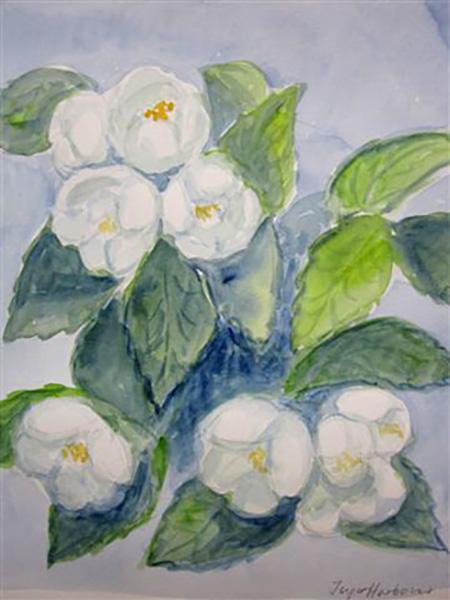 Jasminer, akvarel