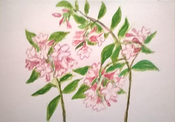 Dronningebusk blomster, akvarel, ca. 2017