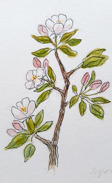Æblegren, akvarel og tush, 2019