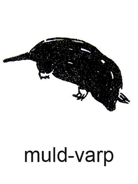 En muldvarp