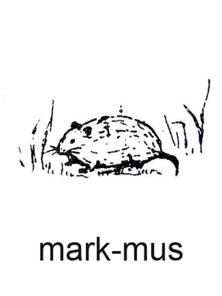 En markmus