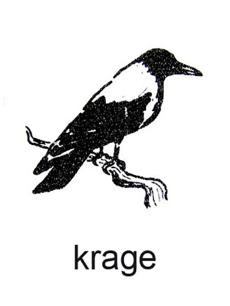En krage