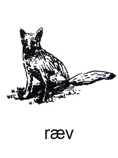 En ræv