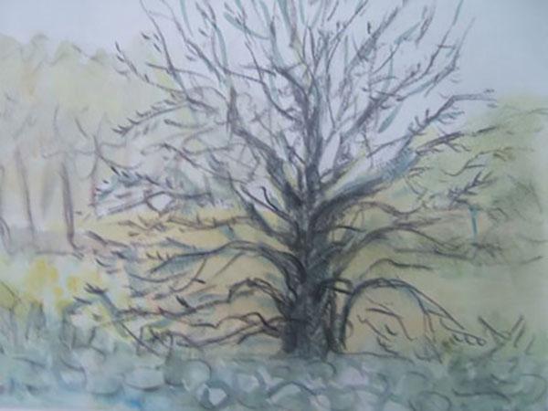 Vildæbletræ, Hønsinge Lyng, akvarel, ca. 1997