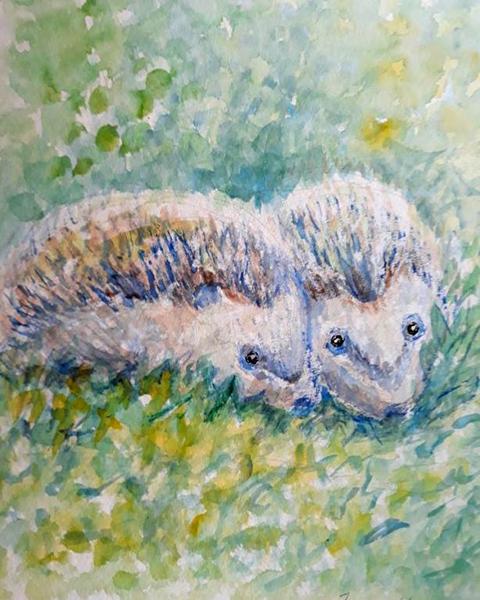 Pindsvin, akvarel, 2019