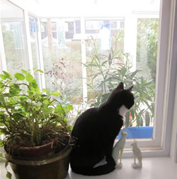 Tilløbende kat på besøg