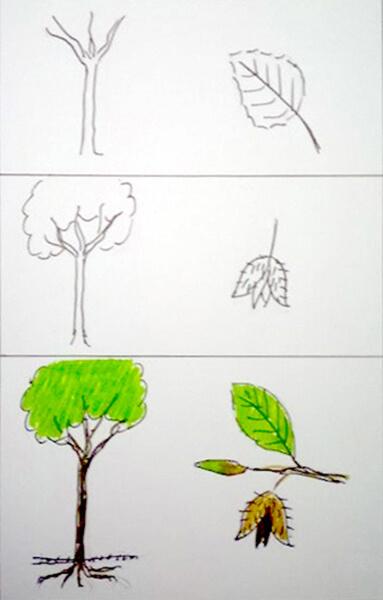 Sådan tegner man et bøgetræ