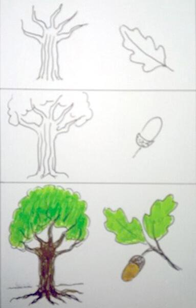 Sådan tegner man et egetræ