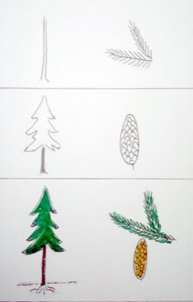 Sådan tegner man et grantræ