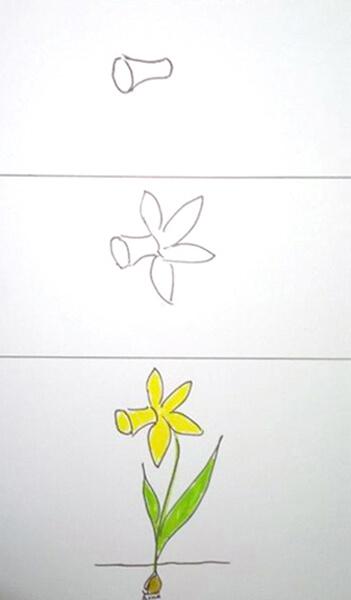 Sådan tegner man en påskelilje. Daffodil