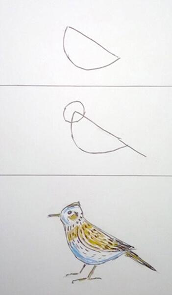 Sådan tegner man en fugl. Lærke