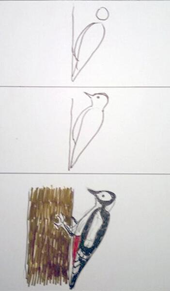 Sådan tegner man en spætte. Flagspætte