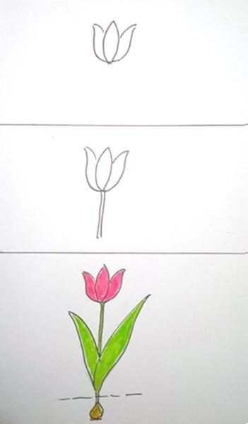 Sådan tegner du en tulipan
