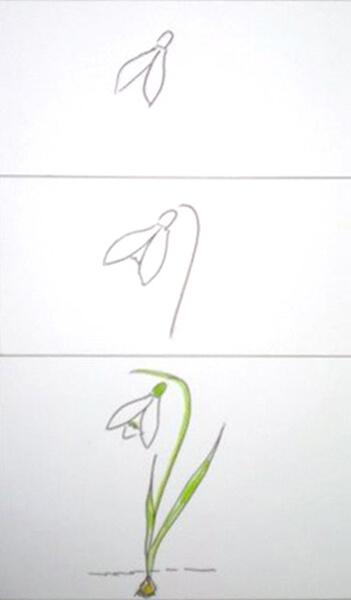 Sådan tegner man en vintergæk