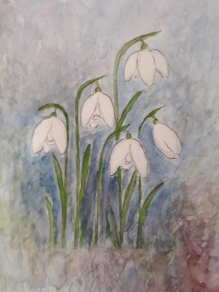 Vintergækker, akvarel, 2021